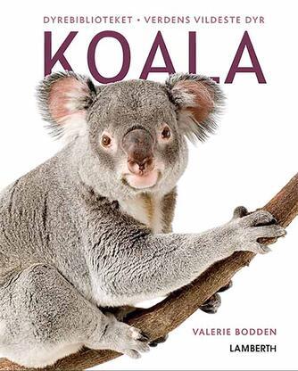 Valerie Bodden: Koala