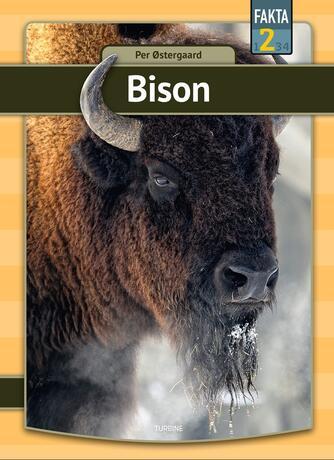 Per Østergaard (f. 1950): Bison