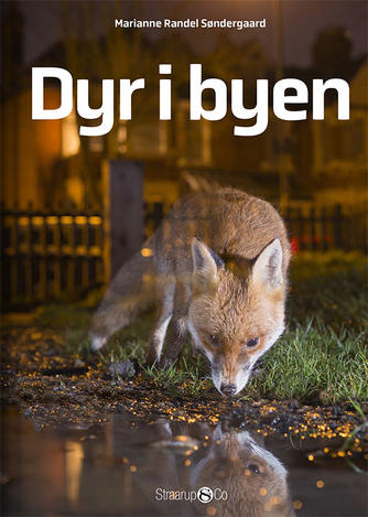 Marianne Randel Søndergaard: Dyr i byen