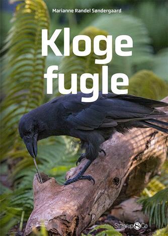 Marianne Randel Søndergaard: Kloge fugle