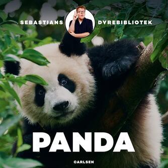 Sebastian Klein: Panda
