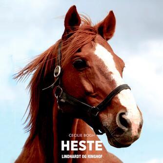 Cecilie Bogh: Heste