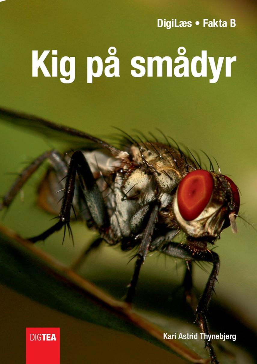 Kari Astrid Thynebjerg: Kig på smådyr